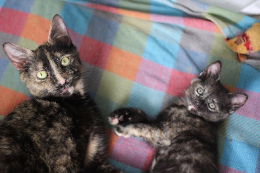 4 истории о брошенных кошках. И все со счастливым концом! Хотя, возможно, они не закончены... рис 2