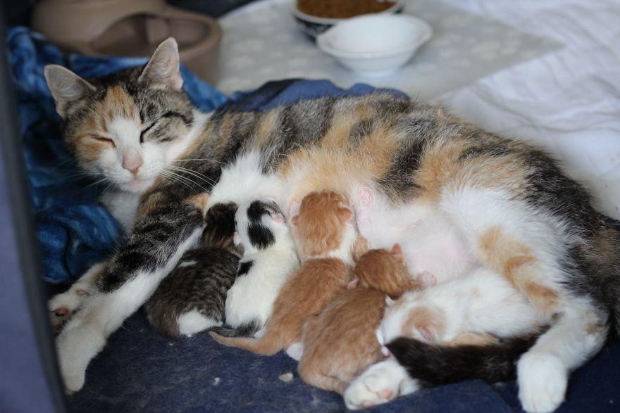 4 истории о брошенных кошках. И все со счастливым концом! Хотя, возможно, они не закончены... рис 6