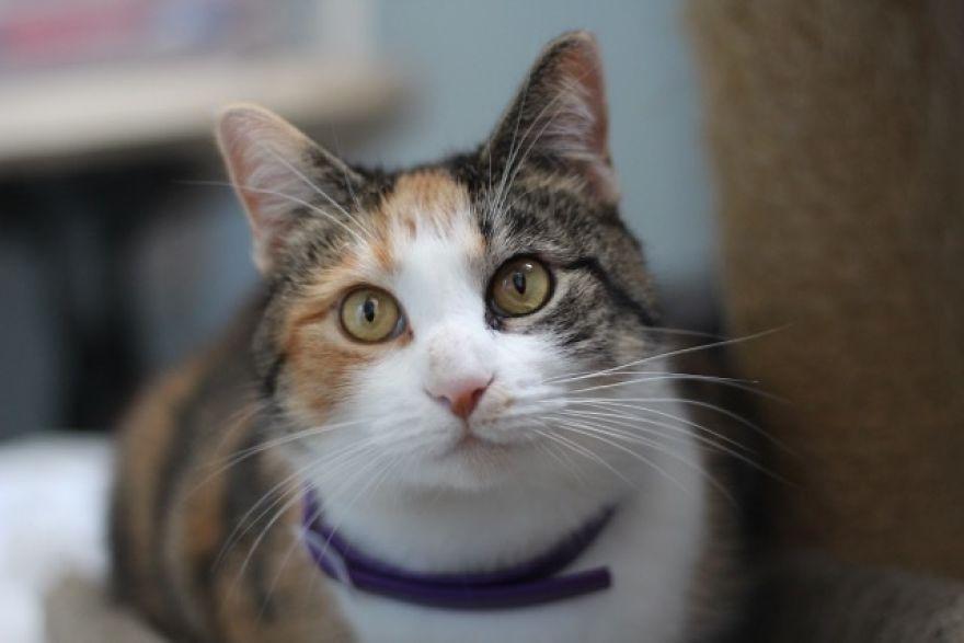 4 истории о брошенных кошках. И все со счастливым концом! Хотя, возможно, они не закончены... рис 7