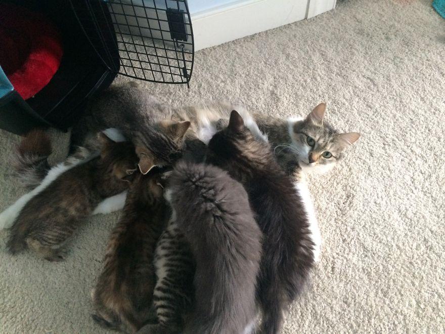4 истории о брошенных кошках. И все со счастливым концом! Хотя, возможно, они не закончены... рис 8