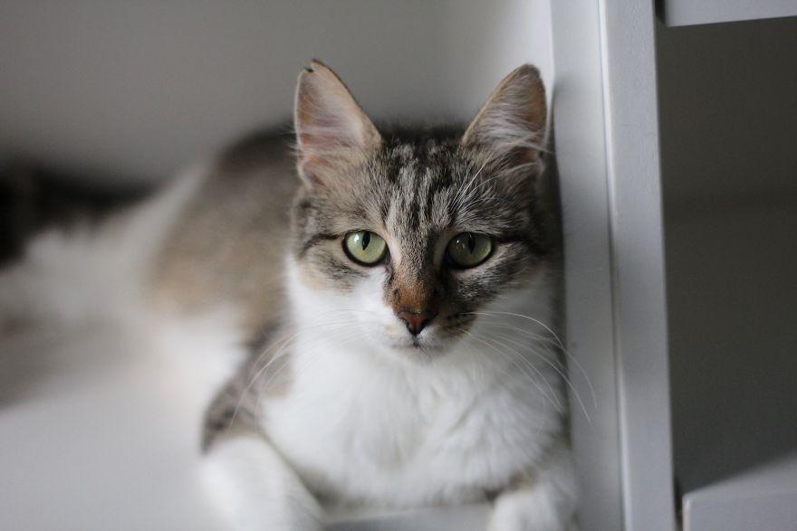 4 истории о брошенных кошках. И все со счастливым концом! Хотя, возможно, они не закончены... рис 9