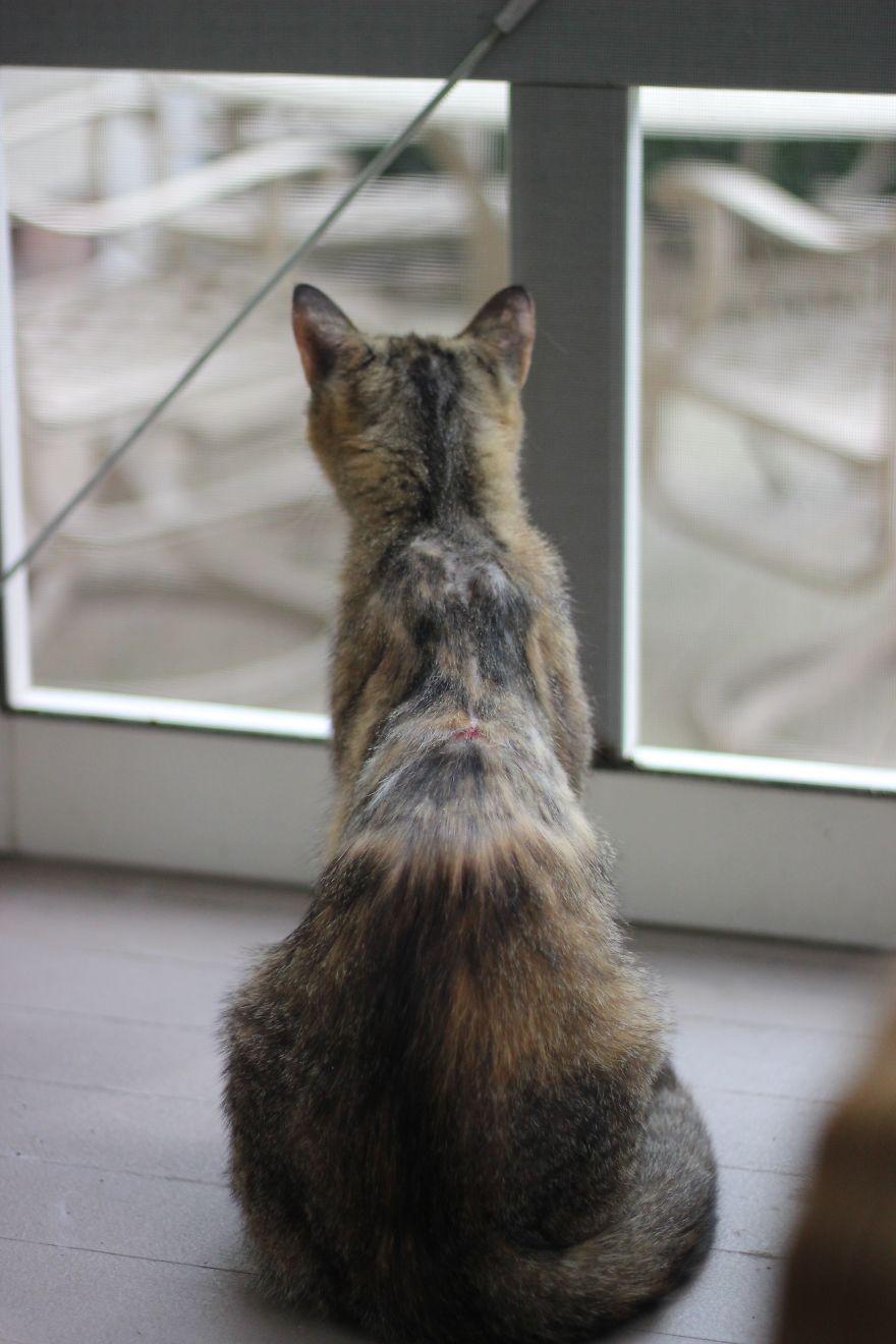 4 истории о брошенных кошках. И все со счастливым концом! Хотя, возможно, они не закончены... рис 11