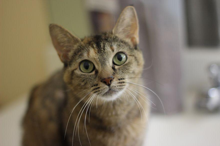 4 истории о брошенных кошках. И все со счастливым концом! Хотя, возможно, они не закончены... рис 12