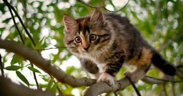 cat-on-tree-1