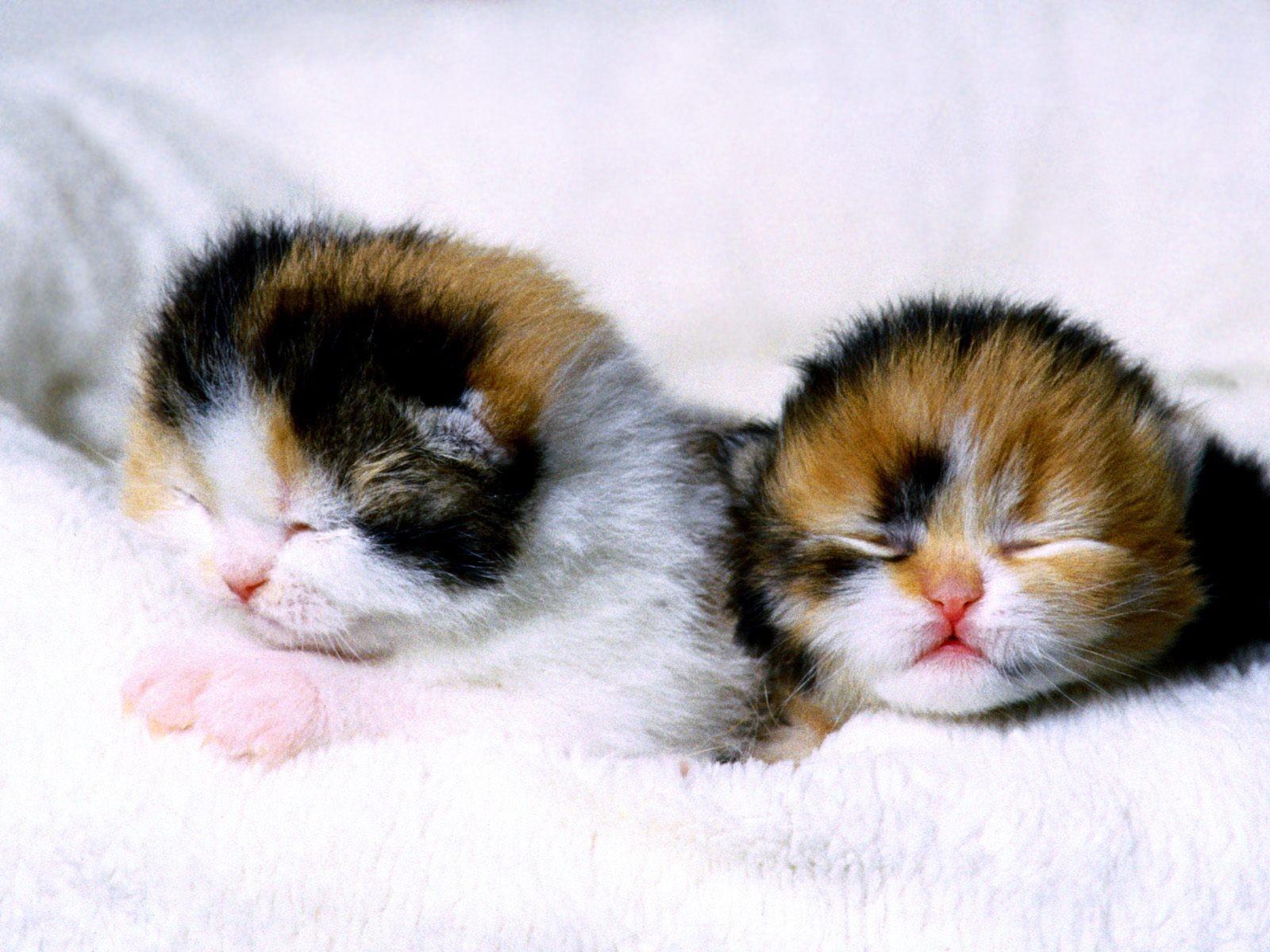 Как дворовая кошка Мурка трёхцветного и трёхлапого котёнка родила, и что из этого вышло!