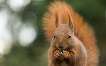 squirrel-wallpaper-11