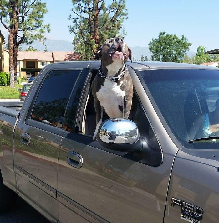 У них была мистическая связь... Этот пёс потерял хозяина, но тут же снова был взят под опеку! рис 5