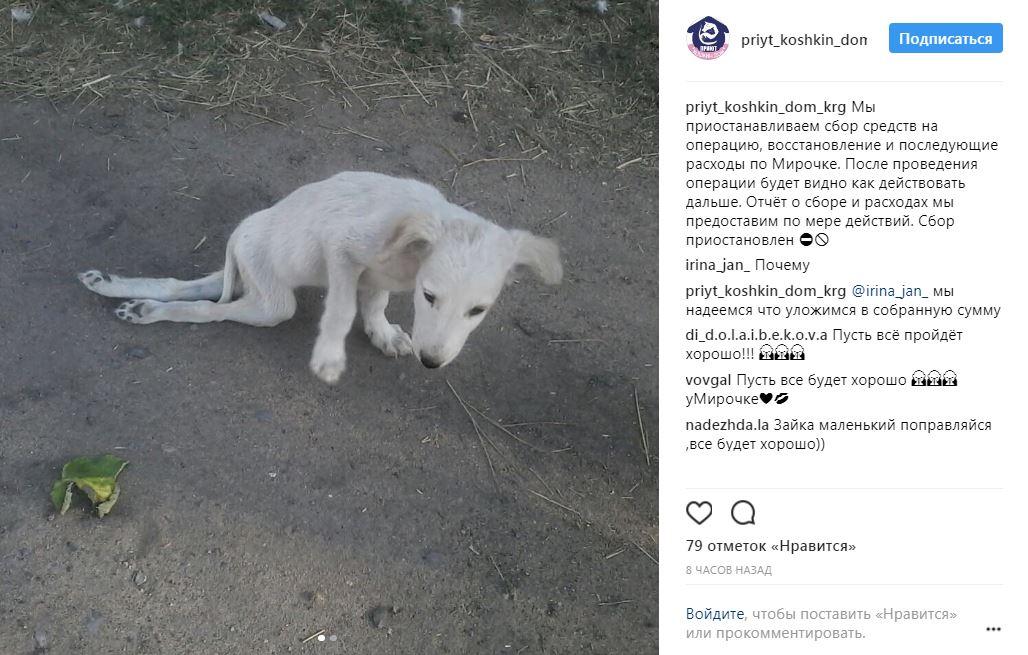 Маленький пёс без коленных чашечек умирал в кустах... Но волонтёры Казахстана объявили войну безразличию!