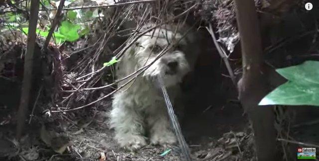 Собачка была настолько умной, что спасатели не могли поймать ее 7 дней! Но она нуждалась в помощи... рис 7