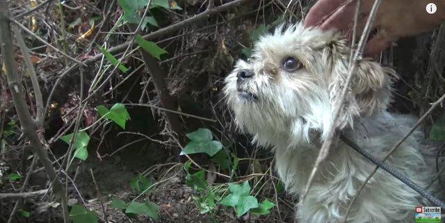 Собачка была настолько умной, что спасатели не могли поймать ее 7 дней! Но она нуждалась в помощи... рис 8