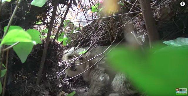 Собачка была настолько умной, что спасатели не могли поймать ее 7 дней! Но она нуждалась в помощи... рис 6