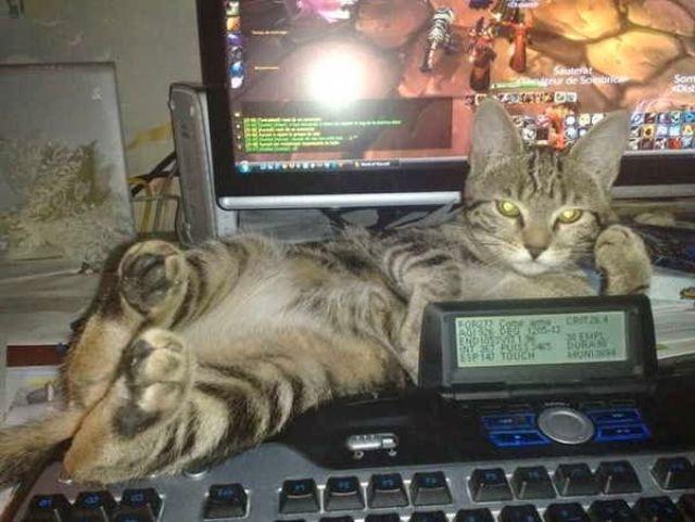 Кот в доме хозяин!) 10 самых странных мест для отдыха, которые выбирают кошки рис 4