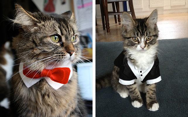 Без кота и свадьба не та! Как нарядить любимчика на свадебное торжество? рис 4