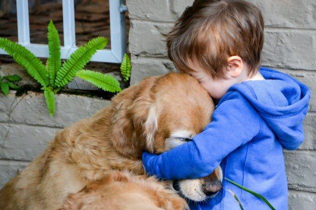 Вы - всё, что у них есть! 18 вещей, которые собака хотела бы вам рассказать... рис 11