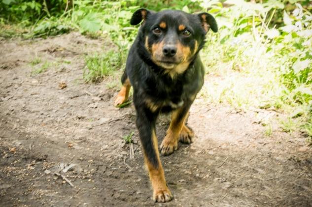 Верность, которой нет границ! Оставленная в лесу собака ждёт возвращения хозяина больше 3 месяцев…