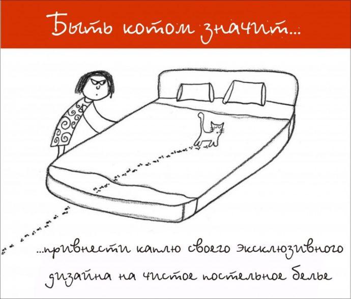Так и живём! 19 иллюстраций, которые демонстрируют жизнь кота ) рис 9