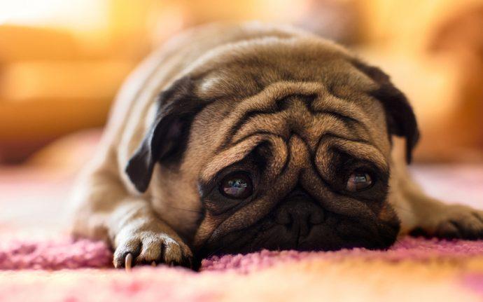 Вы - всё, что у них есть! 18 вещей, которые собака хотела бы вам рассказать... рис 2