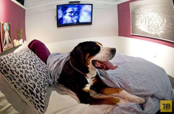 3 самых богатых отеля для собак - здесь отдыхают питомцы звёзд! ) рис 4