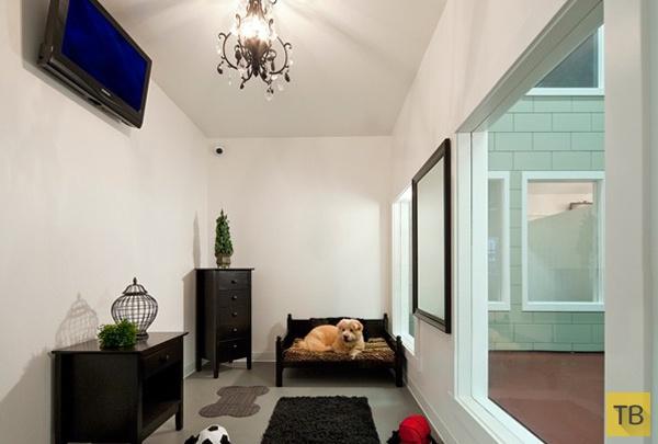 3 самых богатых отеля для собак - здесь отдыхают питомцы звёзд! ) рис 5