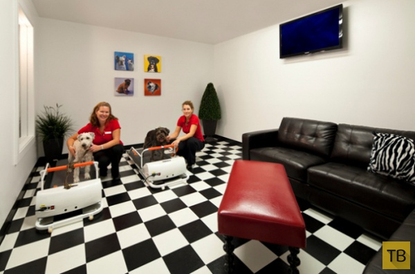 3 самых богатых отеля для собак - здесь отдыхают питомцы звёзд! )