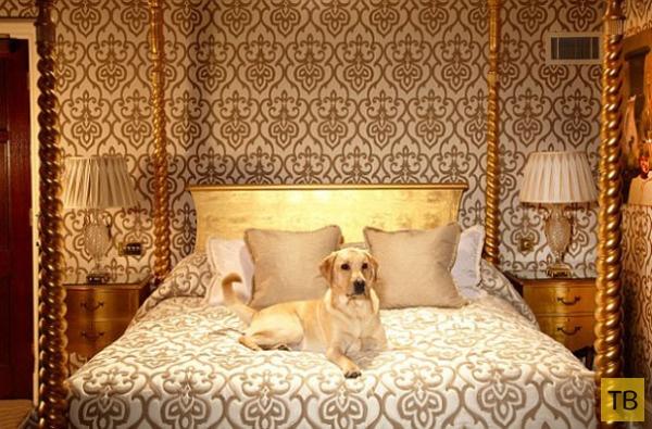 3 самых богатых отеля для собак - здесь отдыхают питомцы звёзд! ) рис 3