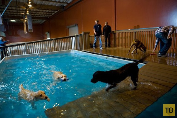 3 самых богатых отеля для собак - здесь отдыхают питомцы звёзд! ) рис 2