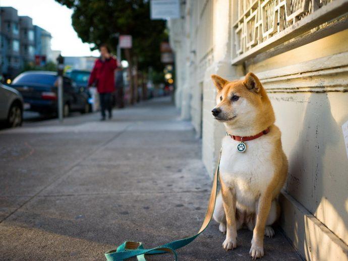Вы - всё, что у них есть! 18 вещей, которые собака хотела бы вам рассказать... рис 10