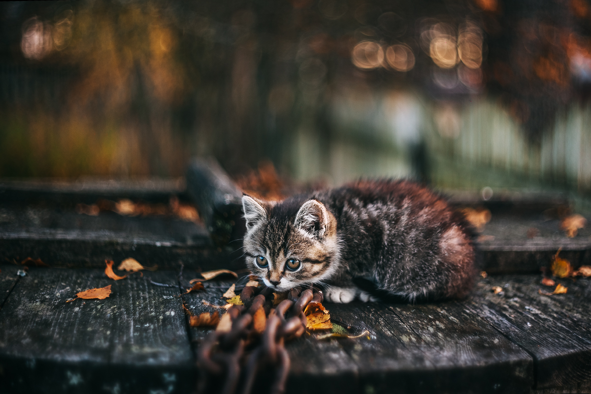 Горячо любимый кот Кузьма, который забрал себе мою болезнь...
