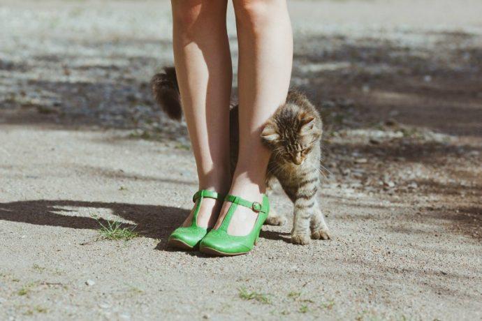 Определяем настроение по направлению усов! Новые интересности про наших любимых кошек :) рис 2