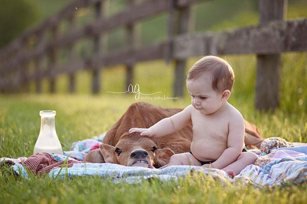 Серьёзно? 25 фото, доказывающих, что коровы – просто большие собаки! :) рис 18