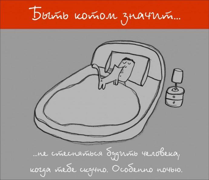 Так и живём! 19 иллюстраций, которые демонстрируют жизнь кота ) рис 5