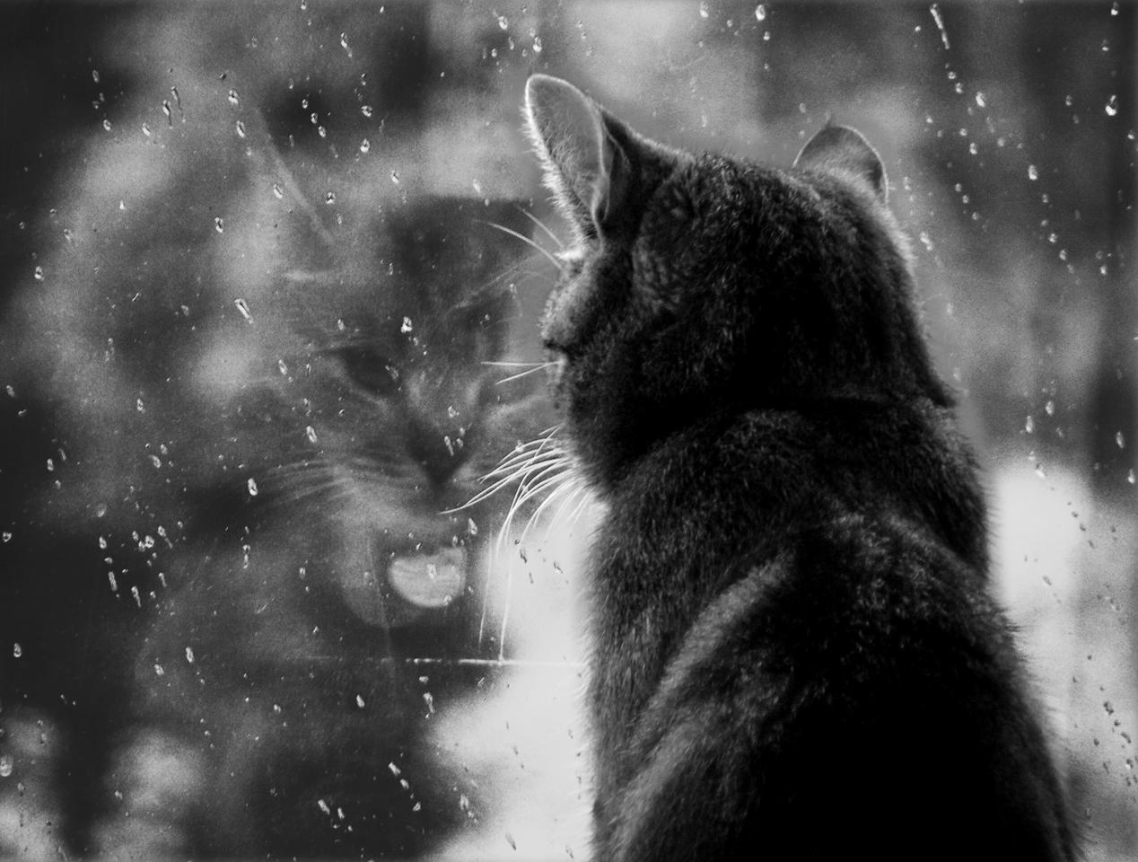 Горячо любимый кот Кузьма, который забрал себе мою болезнь... рис 2