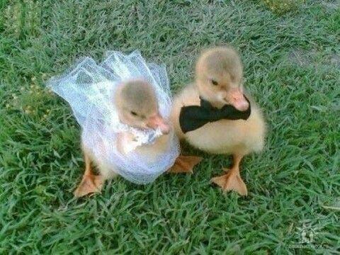 Без кота и свадьба не та! Как нарядить любимчика на свадебное торжество? рис 15