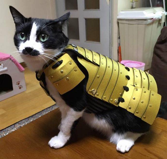 """""""Ой, а собака в самурая превратилась!"""" Стоит ли надевать на питомца модные японские """"доспехи""""? :) рис 2"""