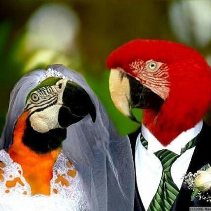 Без кота и свадьба не та! Как нарядить любимчика на свадебное торжество? рис 14
