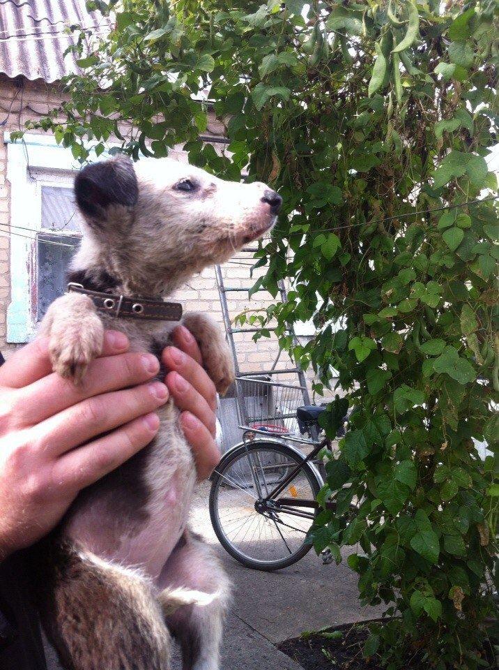 Ларочка, маленький борец за жизнь... Собака-улыбака поневоле: нежная и ласковая!