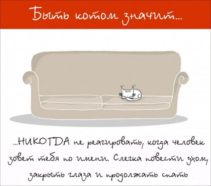 Так и живём! 19 иллюстраций, которые демонстрируют жизнь кота ) рис 2