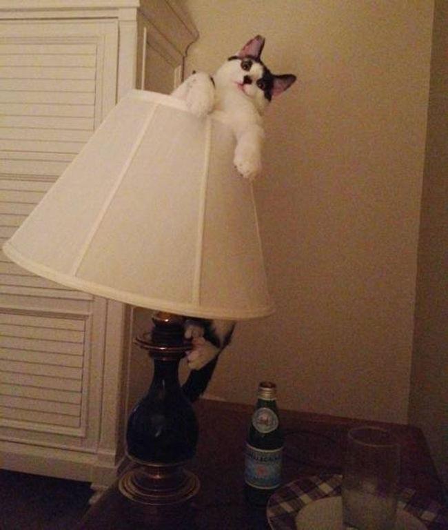 Кот в доме хозяин!) 10 самых странных мест для отдыха, которые выбирают кошки рис 10