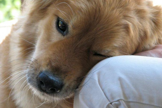 Вы - всё, что у них есть! 18 вещей, которые собака хотела бы вам рассказать... рис 17