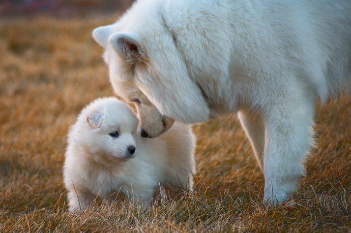 Вы - всё, что у них есть! 18 вещей, которые собака хотела бы вам рассказать... рис 13