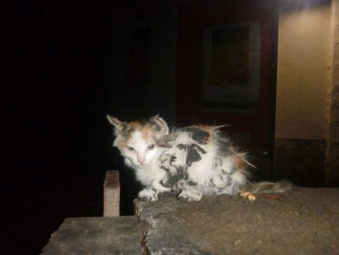 Она хотела посмотреть на звезды, но прилипла к крыше! Спасение котенка, застрявшего в битуме... рис 5