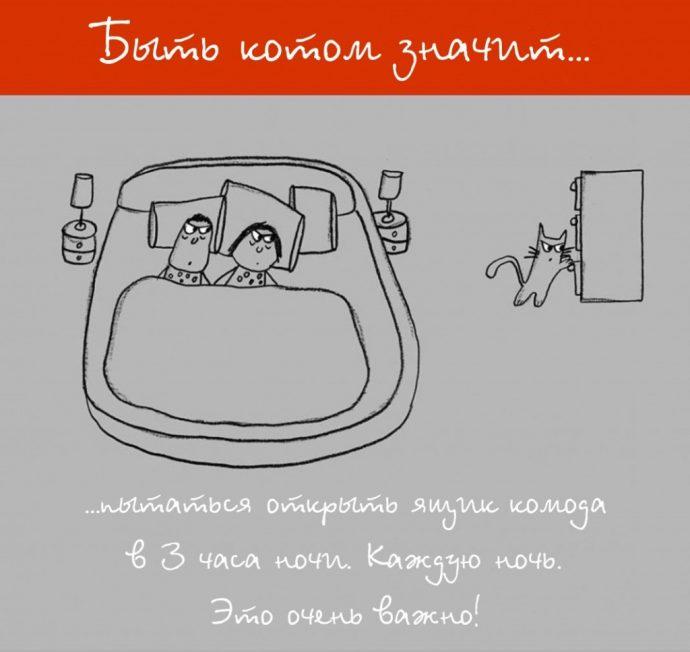 Так и живём! 19 иллюстраций, которые демонстрируют жизнь кота ) рис 18