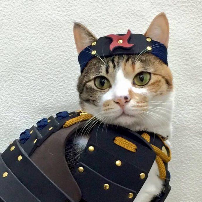 """""""Ой, а собака в самурая превратилась!"""" Стоит ли надевать на питомца модные японские """"доспехи""""? :) рис 3"""