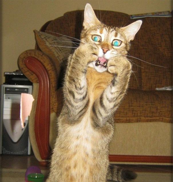 Эти коты настолько драматичны, что заслуживают Оскара! :)) рис 4