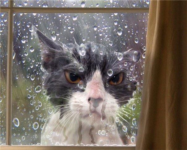 Эти коты настолько драматичны, что заслуживают Оскара! :)) рис 6