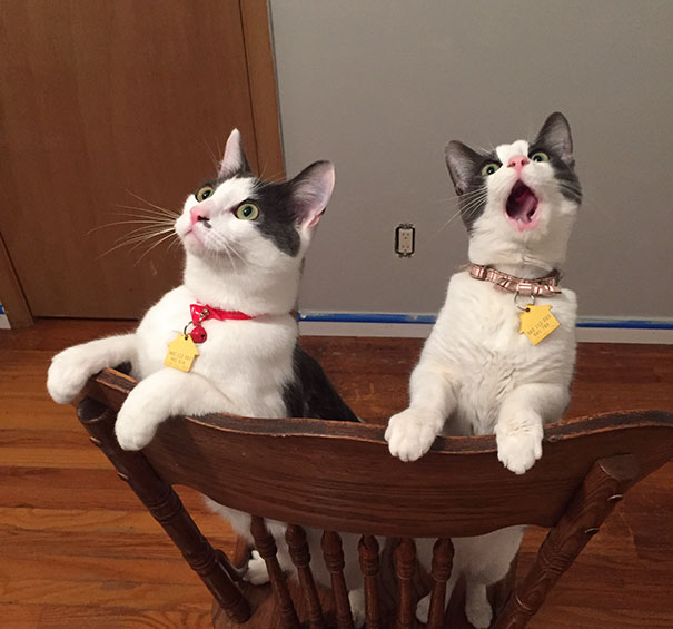 Эти коты настолько драматичны, что заслуживают Оскара! :)) рис 2