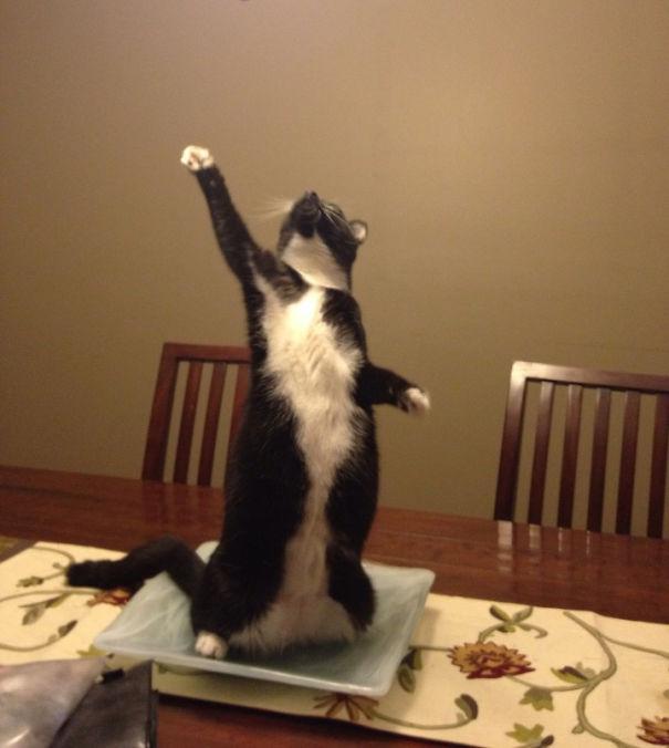 Эти коты настолько драматичны, что заслуживают Оскара! :)) рис 9