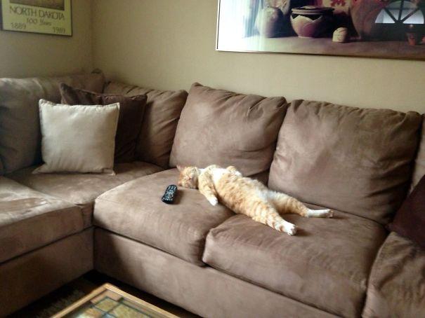 Эти коты настолько драматичны, что заслуживают Оскара! :)) рис 7