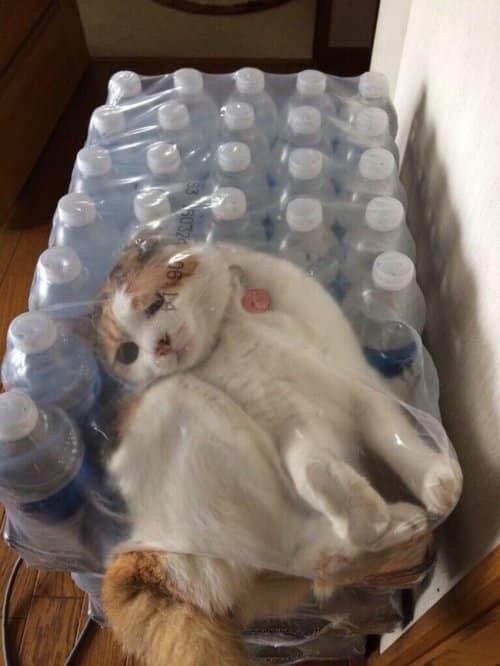 Кот в доме хозяин!) 10 самых странных мест для отдыха, которые выбирают кошки рис 3