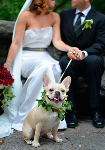 Без кота и свадьба не та! Как нарядить любимчика на свадебное торжество? рис 9